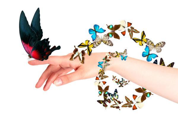 It's a Butterfly Summer!